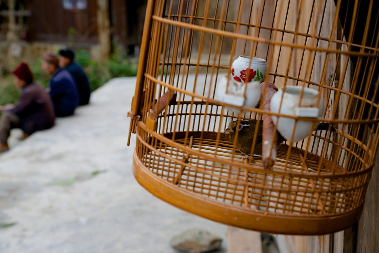 In the Zhang Ao village, treasured pets fill the square with song.