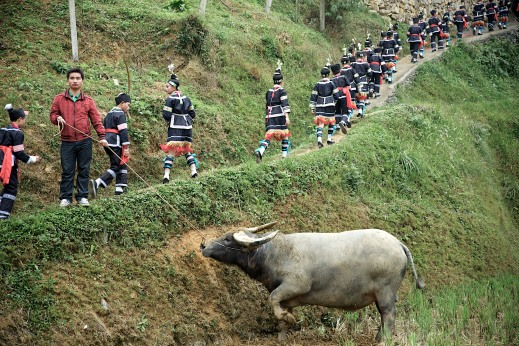 At the Tasting New Rice Festival in Gaoding, members of the 100 Bird Miao head to lunch before the water buffalo fighting begins.