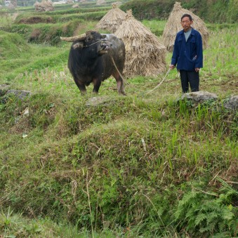 A man and his water buffalo wait their turn at the water buffalo fight in Gaoding, China.